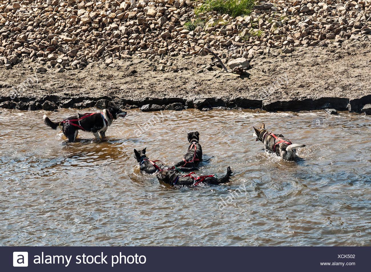 Dog Kennels Stoke Park