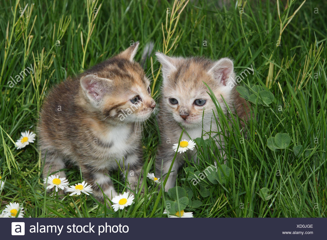 cats young sit meadow garden animals mammals pets small cats felidae domesticates house cat young animal kitten two siblings play together - Garden Animals
