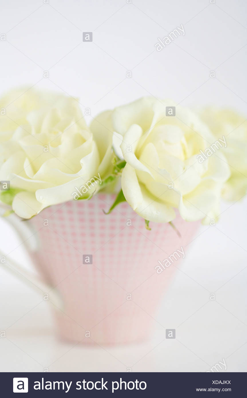 Flower Vase With White Roses On White Background Close Up Stock