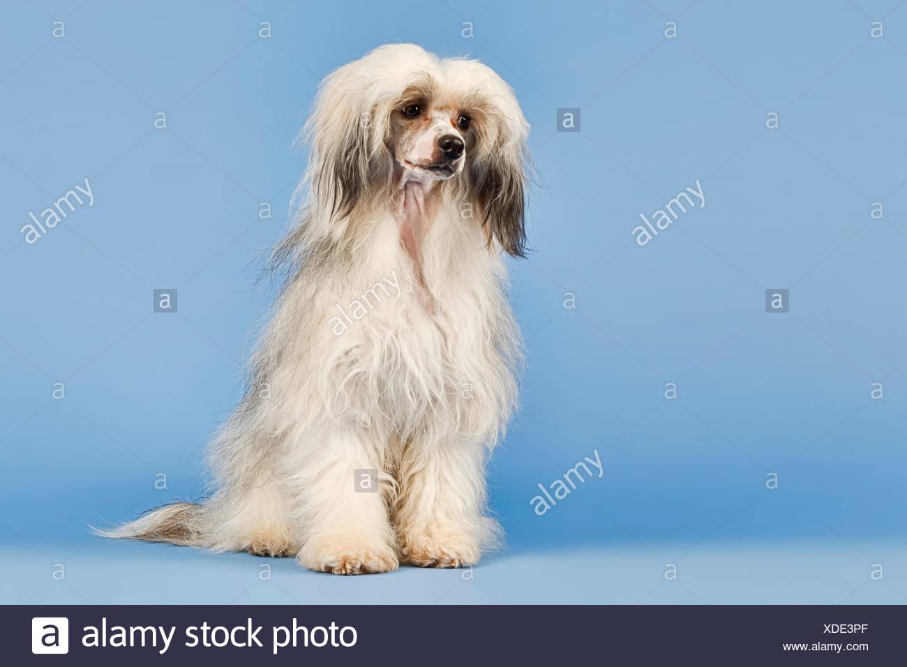 Beste Haar Terrier Mix Hunde Ideen - Die Besten Elektrischen ...