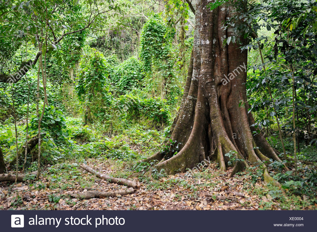 green forest latin singles Need to translate forest to latin here are 4 ways to say it.