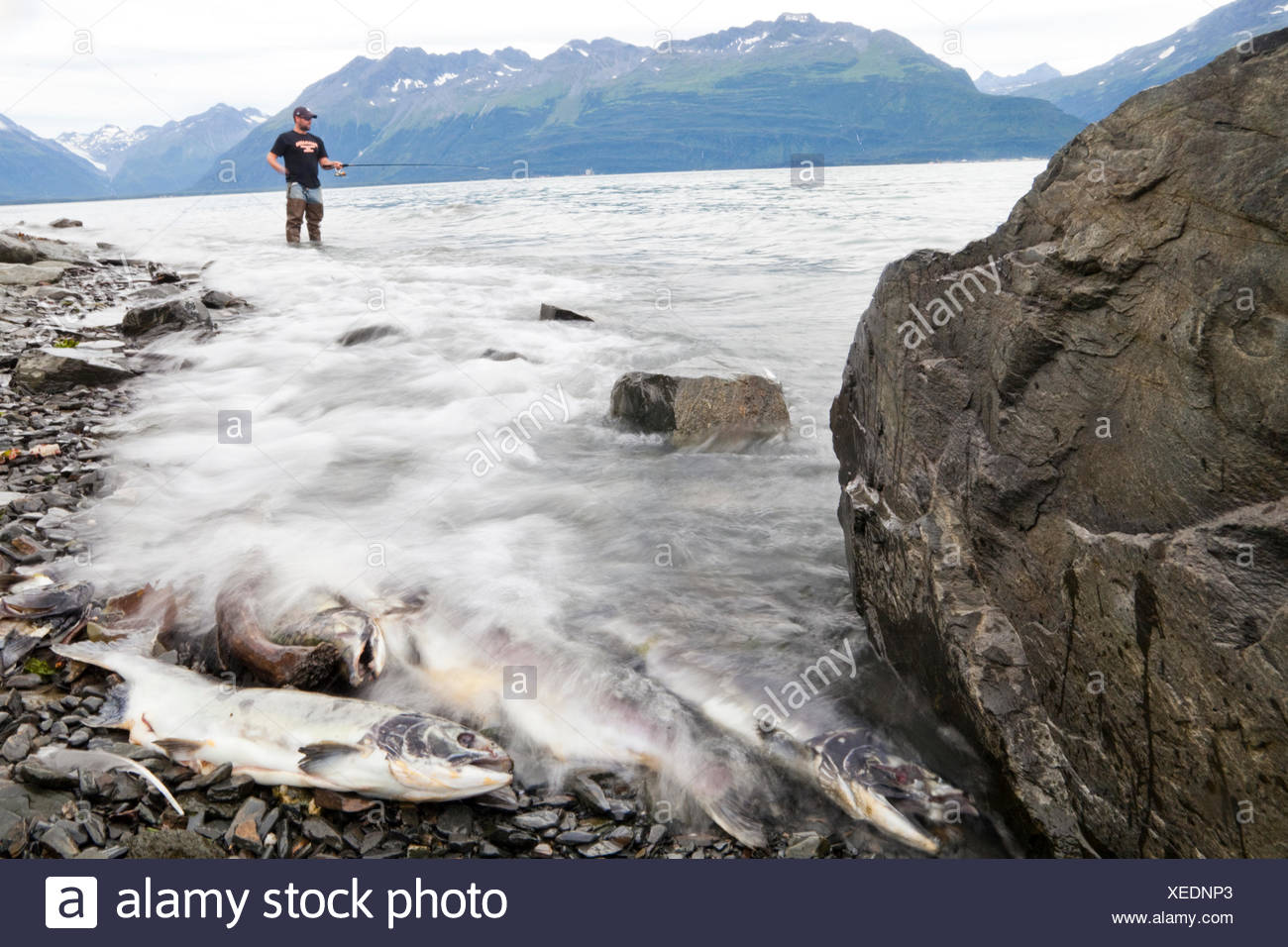 Pipeline animals stock photos pipeline animals stock for Salmon fishing bay area