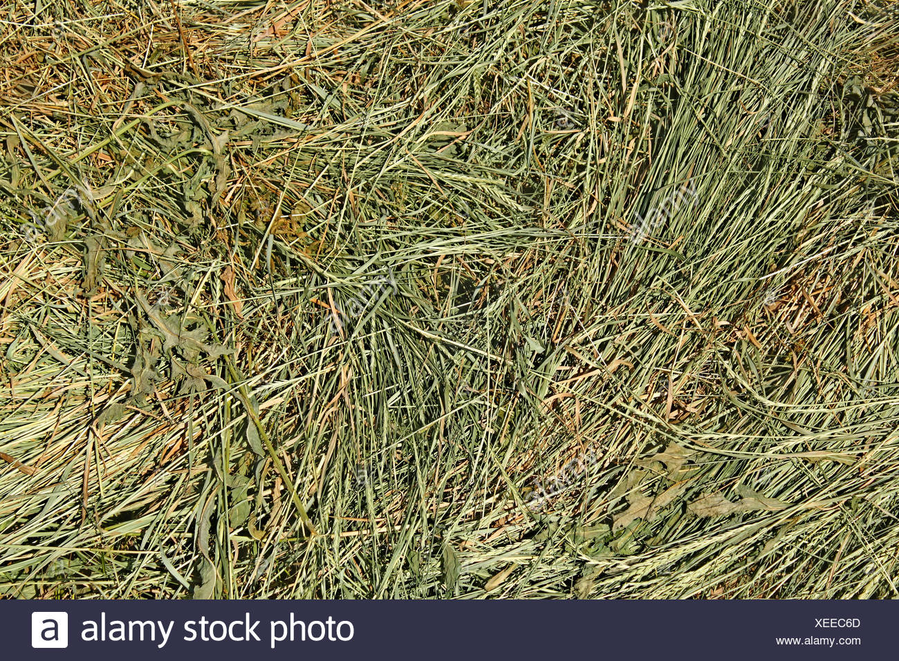 wild grass texture. Hay With Cereal And Other Wild Grasses - Stock Image Grass Texture P