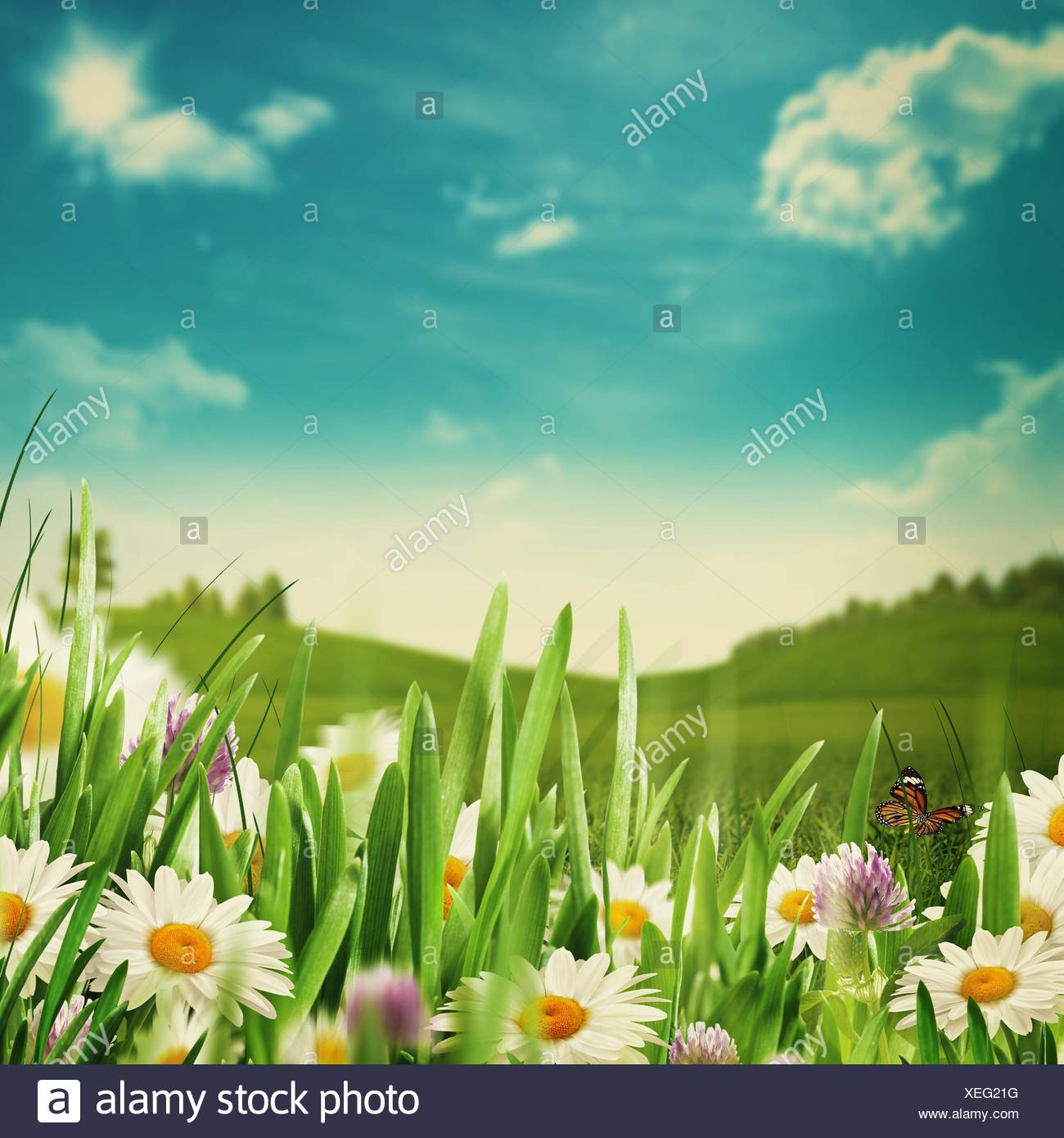 green grass blue sky flowers garden beauty meadow with flowers and green grass under blue skies seasonal backgrounds skies
