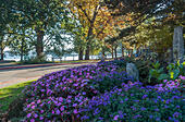 trees-at-seward-park-in-seattle-washingt