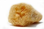 dried-natural-luffa-c5rm66.jpg