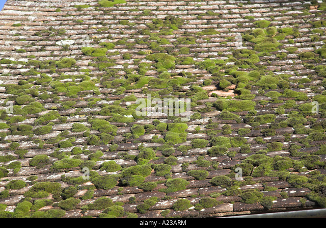 Moss Growing On Tiled Roof   Stock Image