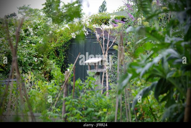 Garden Sheds Exeter garden shed vegetable plot stock photos & garden shed vegetable