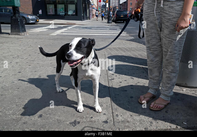 Dog Walking Cobble Hill Brooklyn