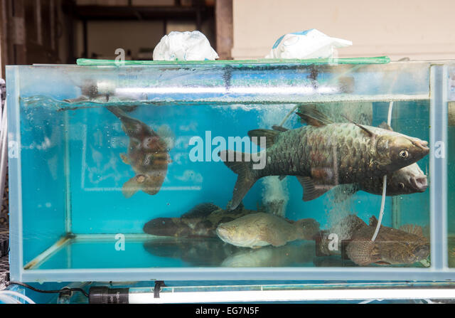 Belly tank stock photos belly tank stock images alamy for 99 5 the fish
