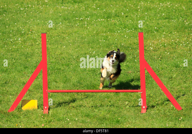 Agility Dog Association Of Australia