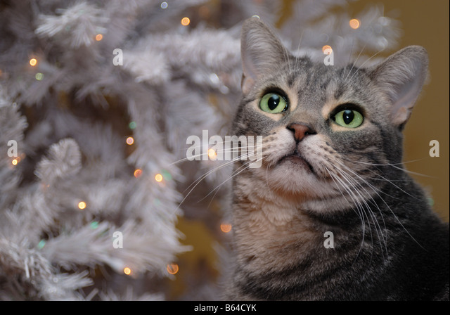 Cat And Christmas Tree Stock Photos & Cat And Christmas Tree Stock ...