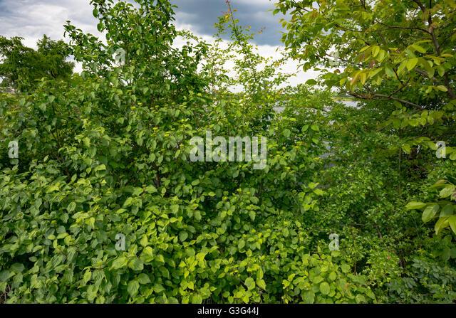 spring green three trees - photo #27