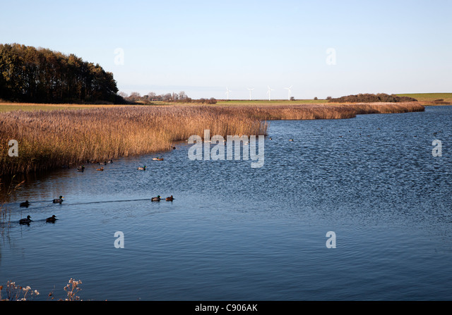 Duiveland Stock Photos  u0026 Duiveland Stock Images   Alamy