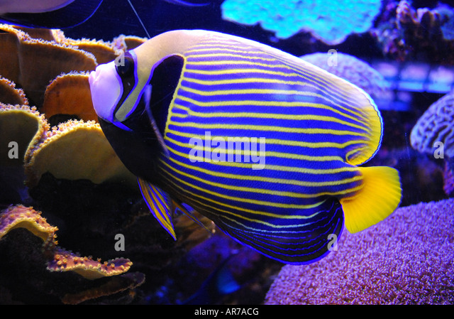 ... Observatory and Aquarium, Eilat, South District, Israel - Stock Image