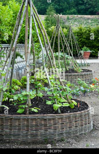 Raised Beds Garden Lettuce Stock Photos Raised Beds