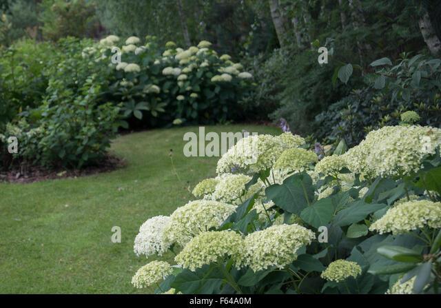 Garden grove borders : Grasses border stock photos ornamental
