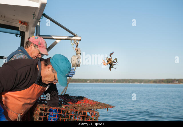 lobsterman stock photos  u0026 lobsterman stock images
