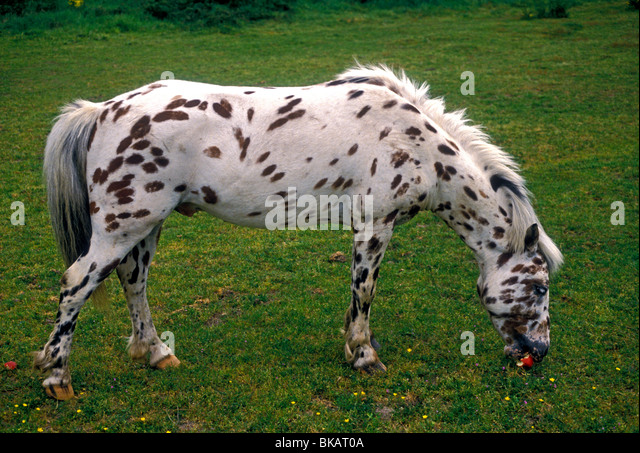 horse with spotted coat stock photos amp horse with spotted