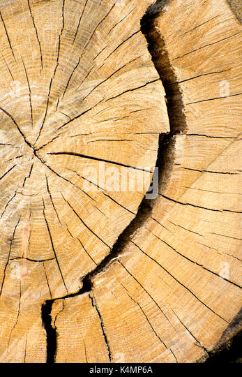 Layered Wood Stock Photos Amp Layered Wood Stock Images Alamy