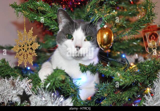 Kitten In Christmas Decorations Stock Photos & Kitten In Christmas ...