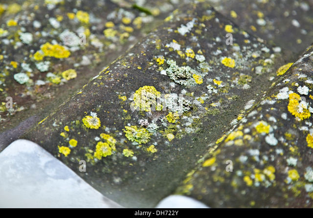 how to stop moss growing on concrete roof tiles