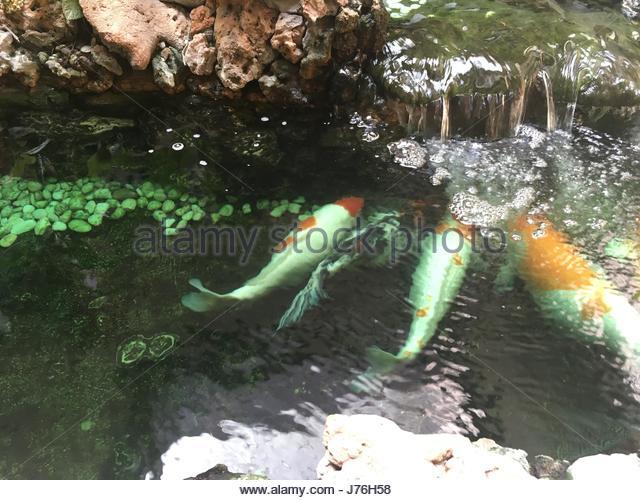 Waterfall chinese garden stock photos waterfall chinese for Artificial koi fish