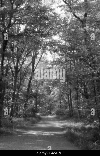 Black And White Misty : Misty black and white stock photos images alamy