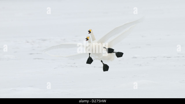 birds landing single mature ladies Birds landing navy women & birds landing navy men if you're looking for single birds landing navy women and birds landing navy men, then bravo zulu you've come to the right place.