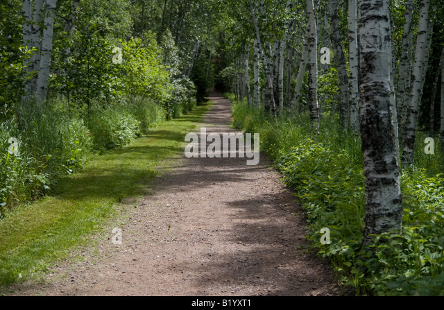 path in the birch - photo #36