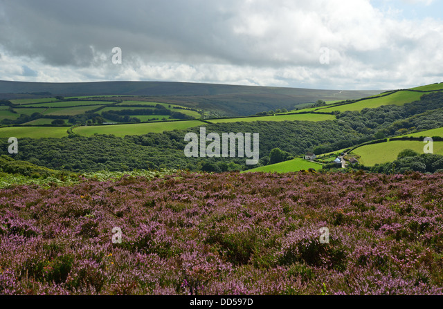 Exmoor National Park United Kingdom  City pictures : National Park North Somerset Stock Photos & National Park North ...