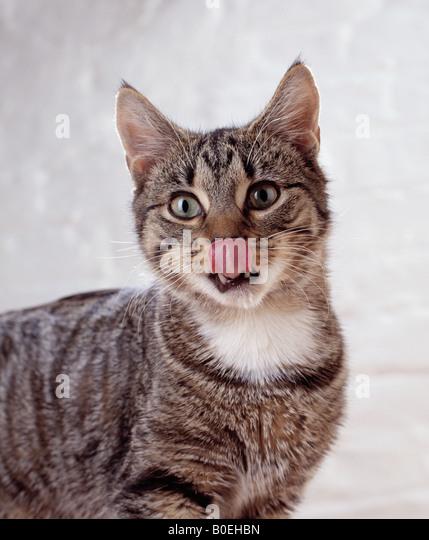 cat lick nose