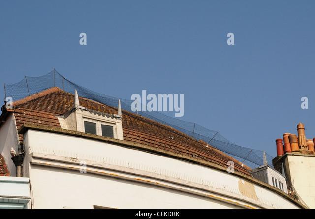 Pigeon Roof Spikes Amp Image Is Loading Defender Ridge Roof