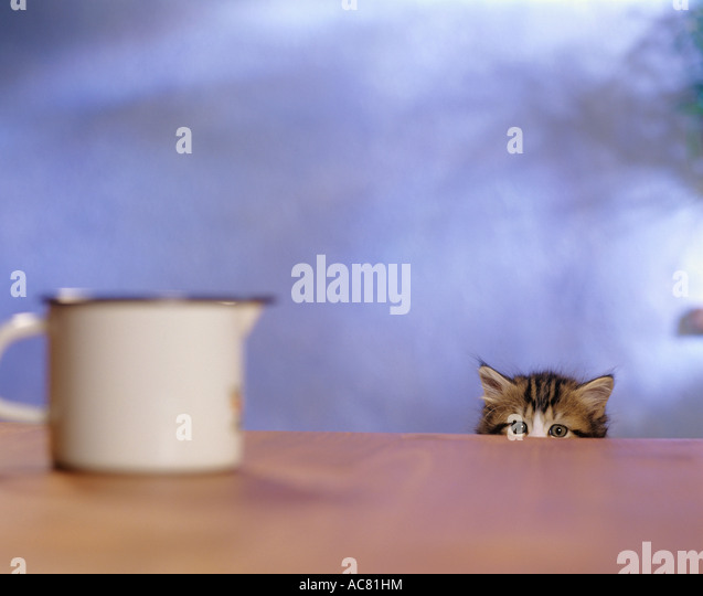 Cat Sat On Glass Table