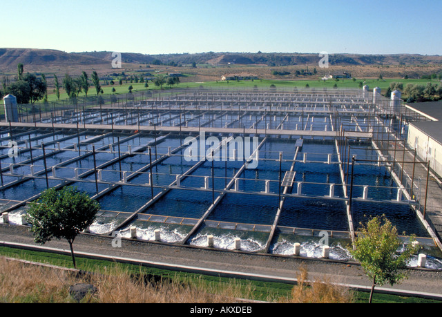 Aquaculture fish ponds stock photos aquaculture fish ponds stock overview of the rectangular ponds of a fish farming installation in rural boise idaho sciox Images