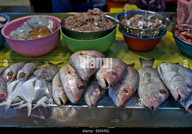 Fish catch display stock photos fish catch display stock for Daily fresh fish