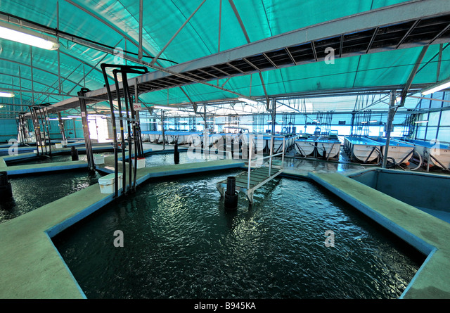 Cool Indoor Pools With Fish fish pools stock photos & fish pools stock images - alamy