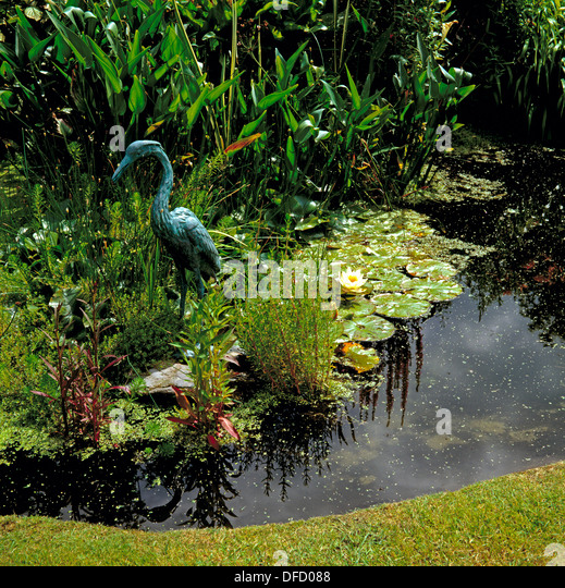 Feature plant garden stock photos feature plant garden for Garden pond guards