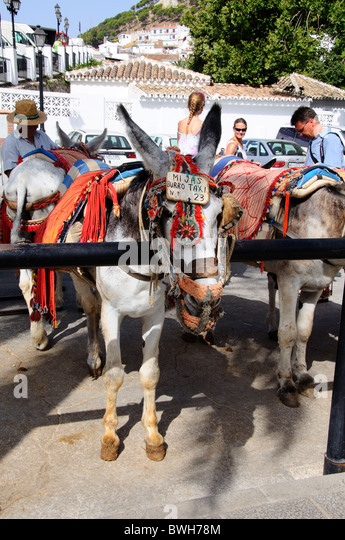 Donkey rides pueblo blanco whitewashed stock photos for Burro blanco