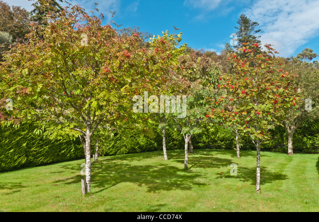 Inverewe gardens stock photos inverewe gardens stock for Garden trees scotland