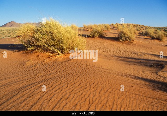 Kalahari Desert South Africa Stock Photos & Kalahari ...
