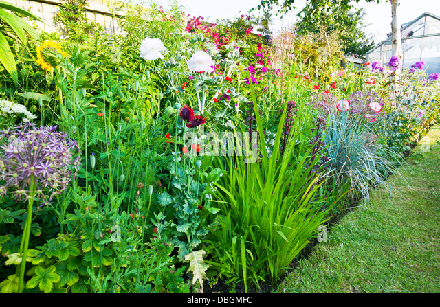 Densely stock photos densely stock images alamy for Typical landscaping plants
