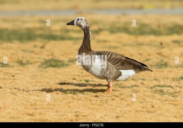 canada goose outlet las vegas