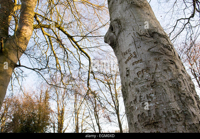a tree trunk is covered with this 4 letters