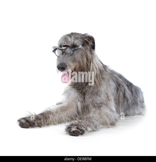 Shaggy Dog London Ontario