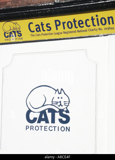 Cats Protection League Ipswich Uk