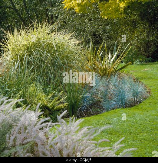 Ornamental grasses border grasses stock photos for Small ornamental grass varieties