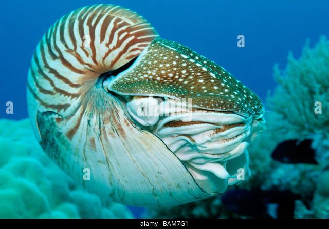the chambered nautilus essay
