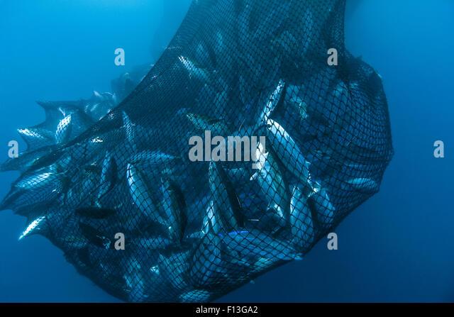 Drag net stock photos drag net stock images alamy for Drag net fishing