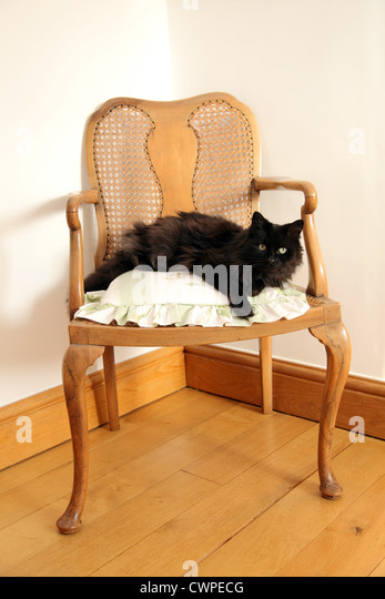 Long haired cute black cat stock photos long haired cute for Cute black chairs